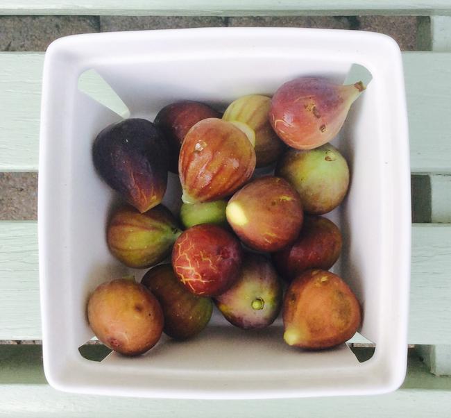 freshly grown figs